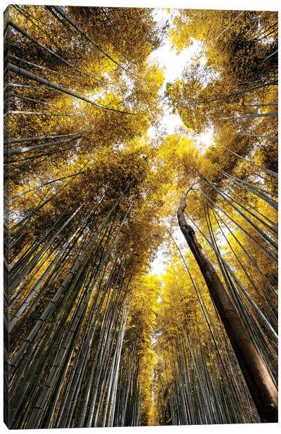 Arashiyama Bamboo Forest V Canvas Art Print