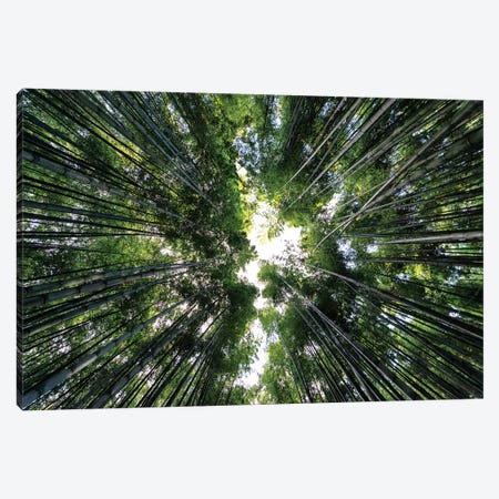 Bamboo Forest Canvas Print #PHD849} by Philippe Hugonnard Canvas Art