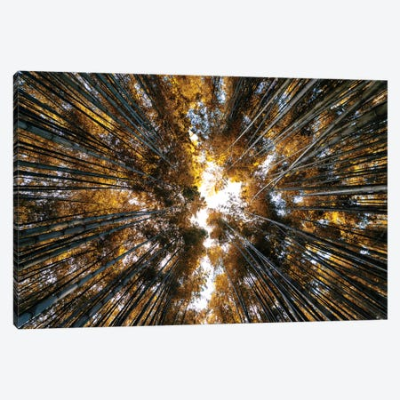 Bamboo Forest II Canvas Print #PHD850} by Philippe Hugonnard Canvas Art Print