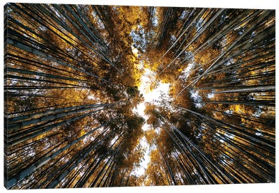 Bamboo Forest II Canvas Art Print