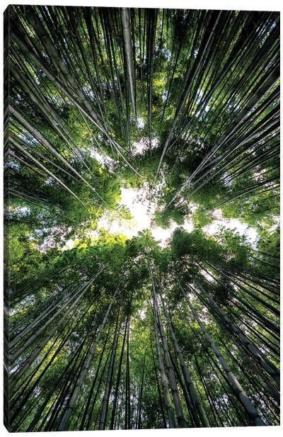 Bamboo Forest III Canvas Art Print