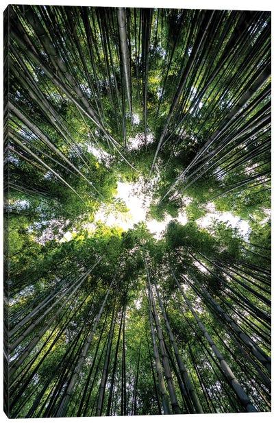 Bamboo Forest III Canvas Art Print