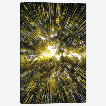 Bamboo Forest V Canvas Print #PHD853} by Philippe Hugonnard Canvas Print