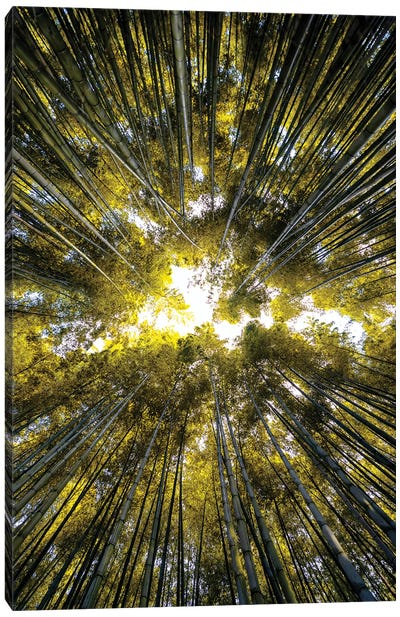 Bamboo Forest V Canvas Art Print