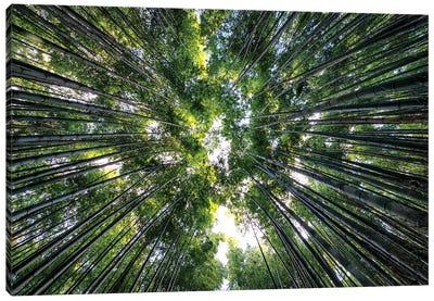 Bamboo Forest VIII Canvas Art Print