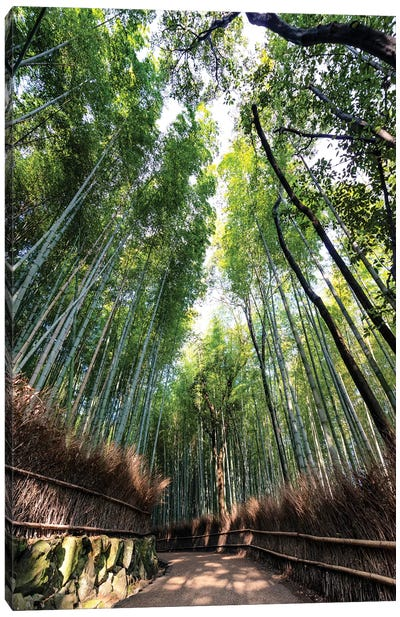Kyoto'S Bamboo Forest Canvas Art Print