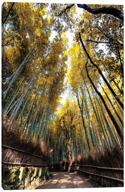 Kyoto'S Bamboo Forest II Canvas Art Print
