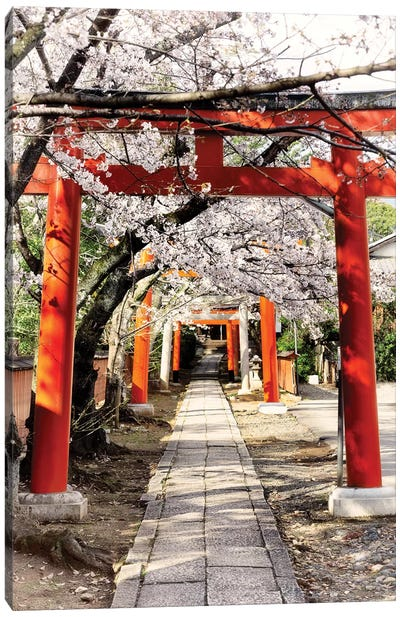 Cherry Blossoms And Torii Canvas Art Print