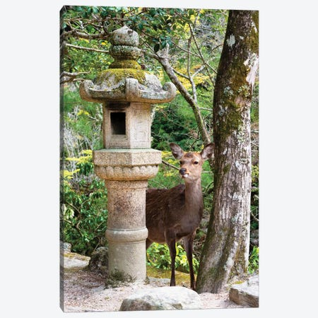 Deer In Miyajima Canvas Print #PHD865} by Philippe Hugonnard Canvas Print