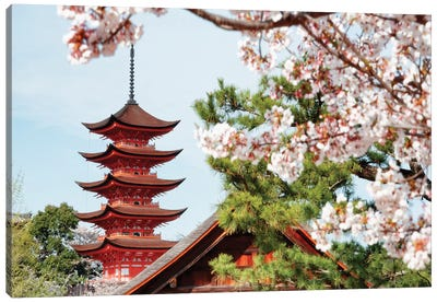 Miyajima Pagoda With Sakura II Canvas Art Print