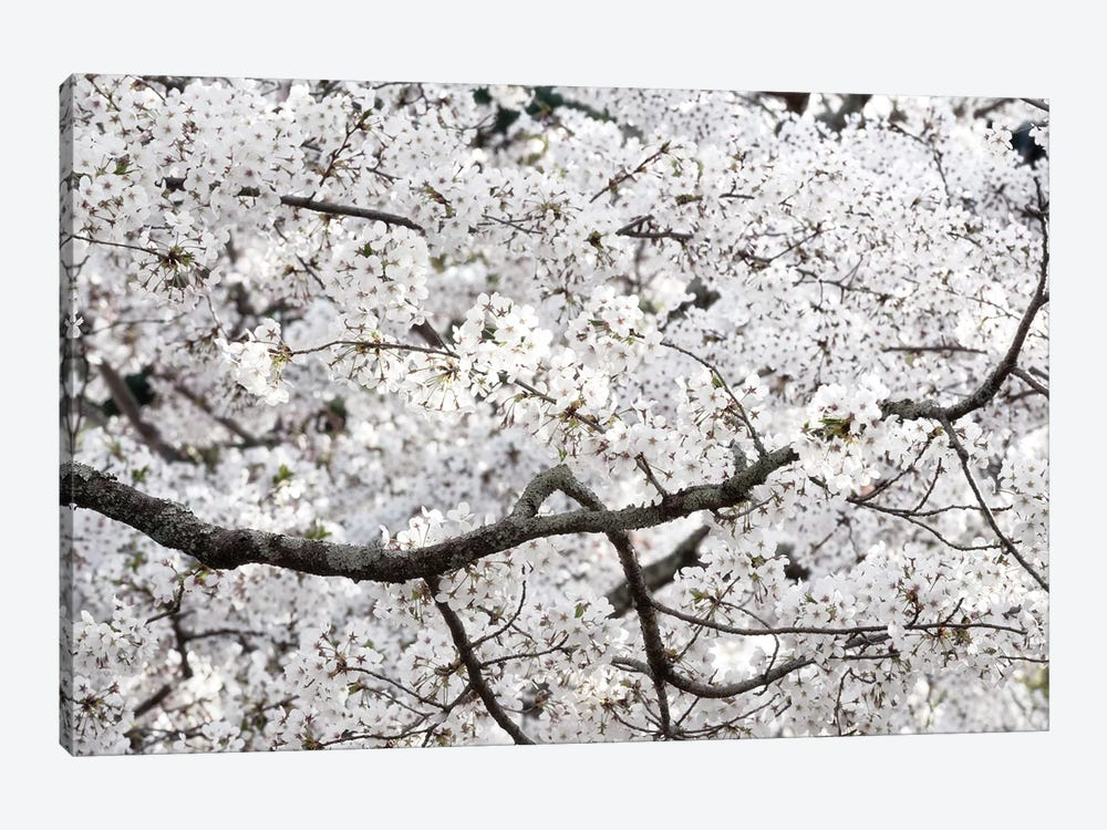 Sakura Cherry Blossom by Philippe Hugonnard 1-piece Art Print