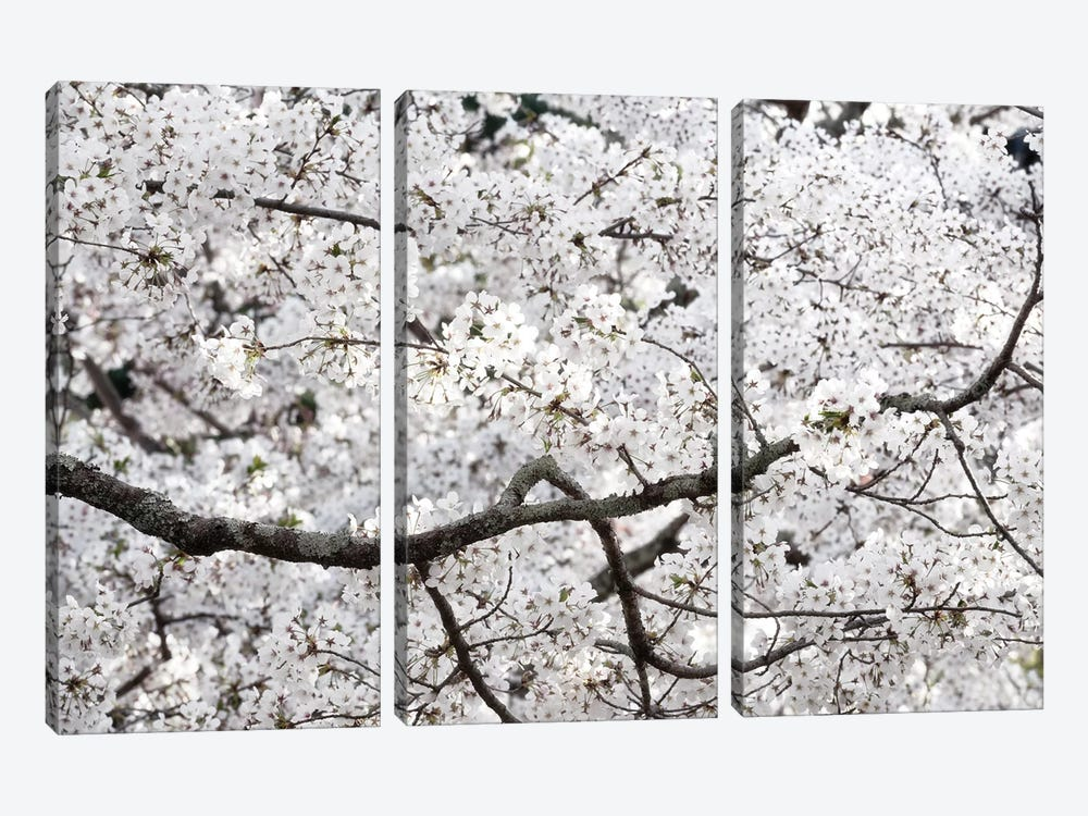 Sakura Cherry Blossom by Philippe Hugonnard 3-piece Canvas Art Print