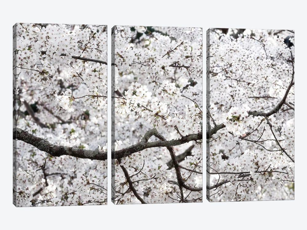Sakura Cherry Blossom by Philippe Hugonnard 3-piece Canvas Art Print