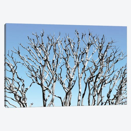 Pastel Tree Canvas Print #PHD878} by Philippe Hugonnard Canvas Art Print