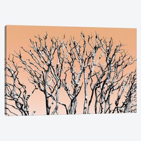 Pastel Tree II Canvas Print #PHD879} by Philippe Hugonnard Canvas Art Print