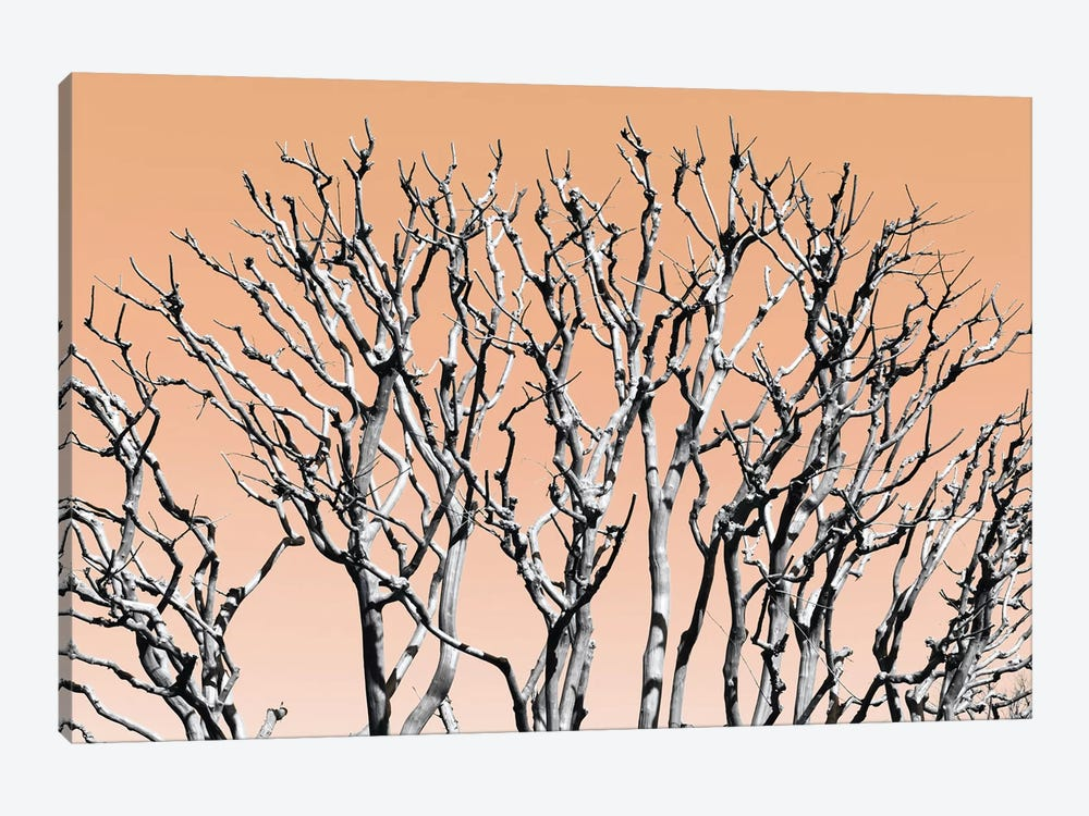 Pastel Tree II by Philippe Hugonnard 1-piece Canvas Art Print