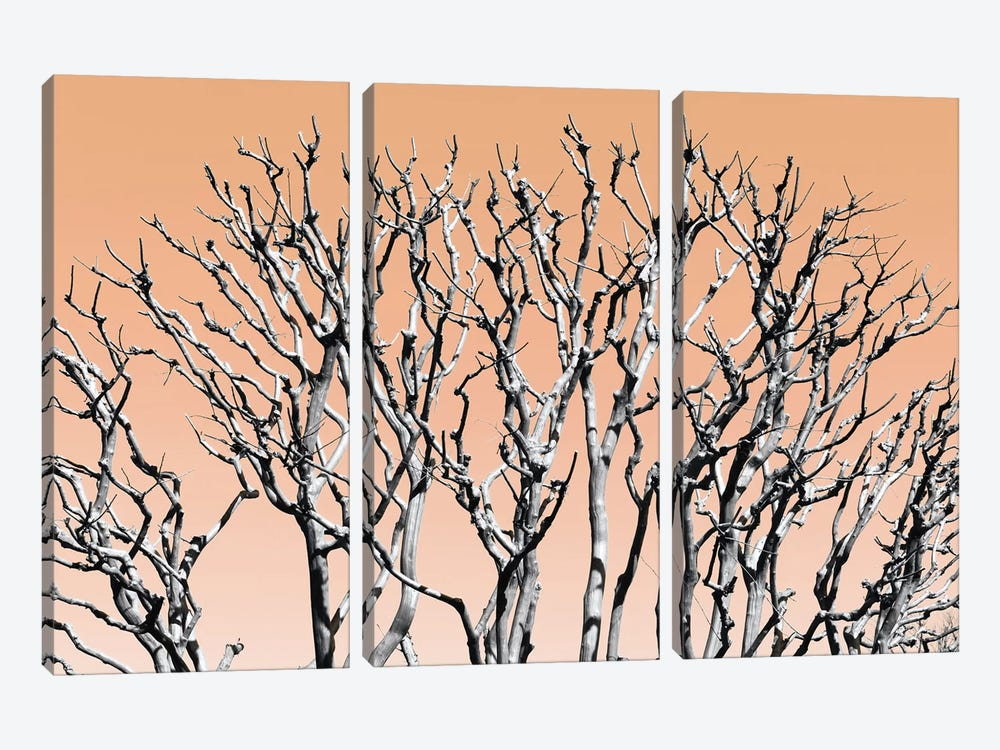 Pastel Tree II by Philippe Hugonnard 3-piece Canvas Print