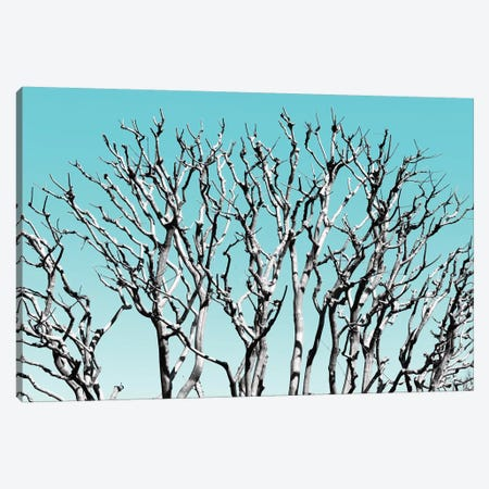 Pastel Tree III Canvas Print #PHD880} by Philippe Hugonnard Canvas Artwork