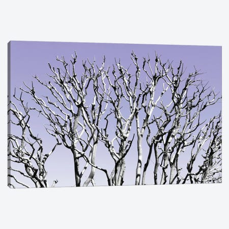 Pastel Tree IV Canvas Print #PHD881} by Philippe Hugonnard Canvas Art