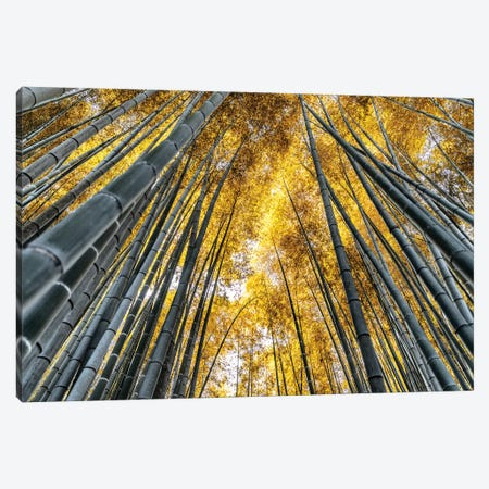 Kyoto Bamboo Forest Canvas Print #PHD886} by Philippe Hugonnard Art Print