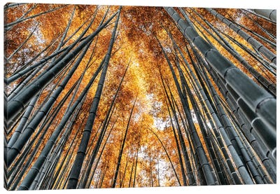 Kyoto Bamboo Forest II Canvas Art Print