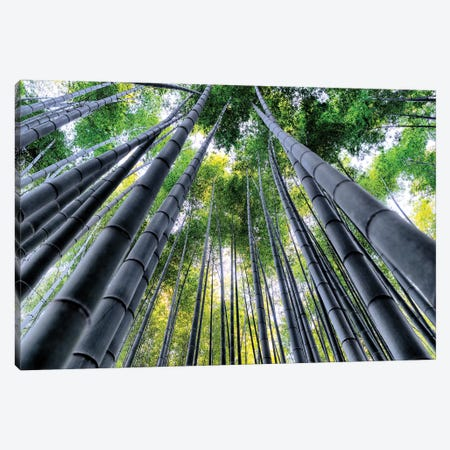 Kyoto Bamboo Forest III Canvas Print #PHD888} by Philippe Hugonnard Canvas Art