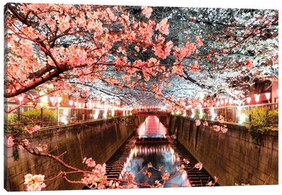 Cherry Blossom At Meguro Canal Canvas Art Print
