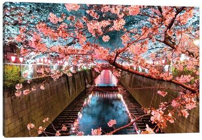 Cherry Blossom At Meguro Canal II Canvas Art Print