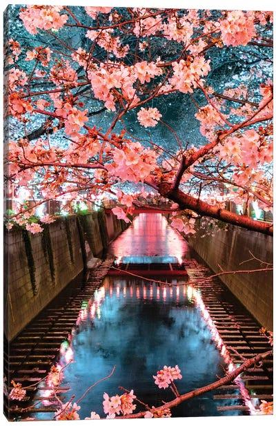 Cherry Blossom At Meguro Canal III Canvas Art Print