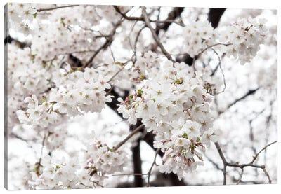 White Sakura Cherry Blossom Canvas Art Print