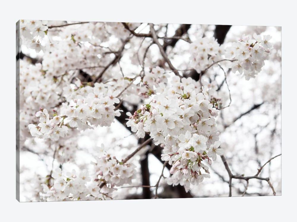 White Sakura Cherry Blossom by Philippe Hugonnard 1-piece Canvas Art