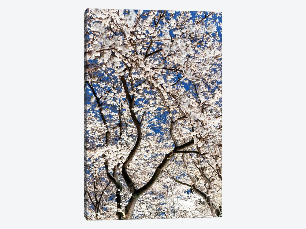 Cherry Blossoms At Night II by Philippe Hugonnard 1-piece Art Print
