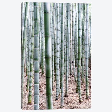 Unlimited Bamboos Canvas Print #PHD923} by Philippe Hugonnard Canvas Print