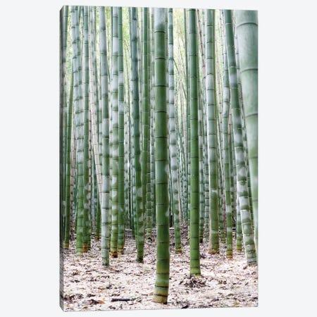 Unlimited Bamboos II Canvas Print #PHD924} by Philippe Hugonnard Canvas Wall Art