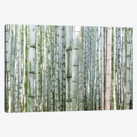 Unlimited Bamboos III Canvas Print #PHD925} by Philippe Hugonnard Canvas Artwork