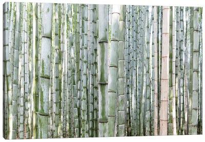 Unlimited Bamboos III Canvas Art Print