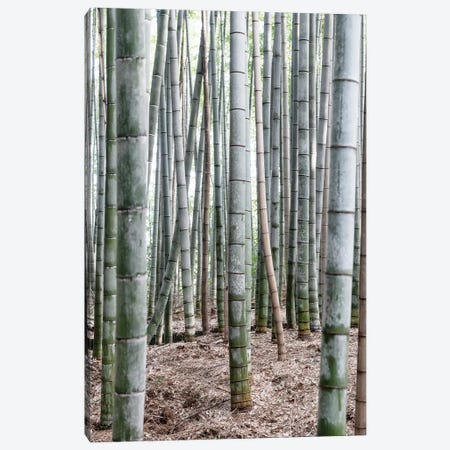 Unlimited Bamboos IV Canvas Print #PHD926} by Philippe Hugonnard Canvas Art