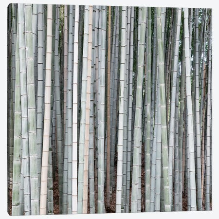 Bamboos Canvas Print #PHD942} by Philippe Hugonnard Canvas Art Print