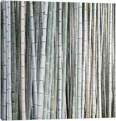 Bamboos II Canvas Art Print