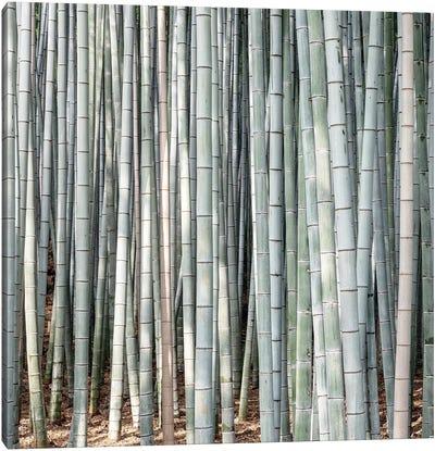 Bamboos III Canvas Art Print