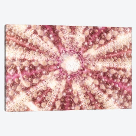 Red Sea Urchin Shell Close-Up Canvas Print #PHD947} by Philippe Hugonnard Canvas Artwork