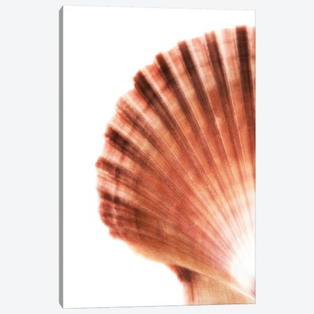 Scallop Seashell 3-Piece Canvas #PHD952} by Philippe Hugonnard Canvas Art