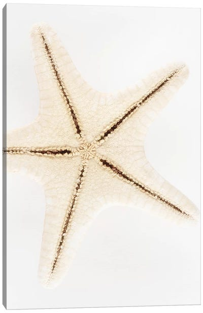 Seashell Star Canvas Art Print