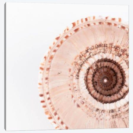 Sundial Shell Canvas Print #PHD985} by Philippe Hugonnard Canvas Art