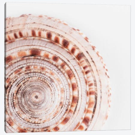 Sundial Shell II Canvas Print #PHD986} by Philippe Hugonnard Canvas Artwork