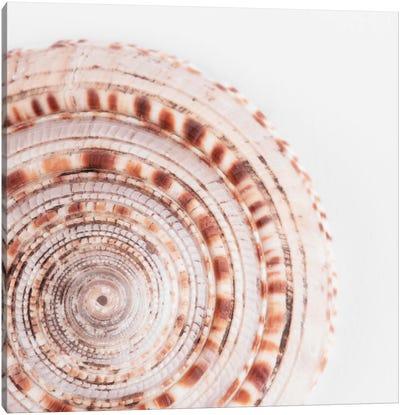 Sundial Shell II Canvas Art Print