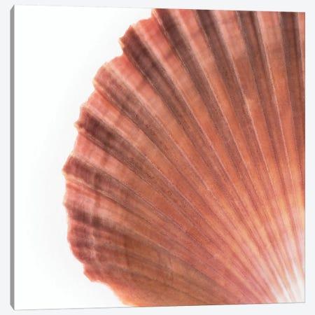 Scallop Seashell Canvas Print #PHD988} by Philippe Hugonnard Canvas Print