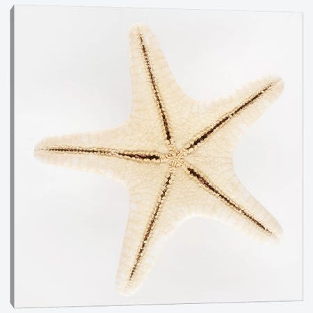 Seashell Star Canvas Print #PHD989} by Philippe Hugonnard Canvas Print