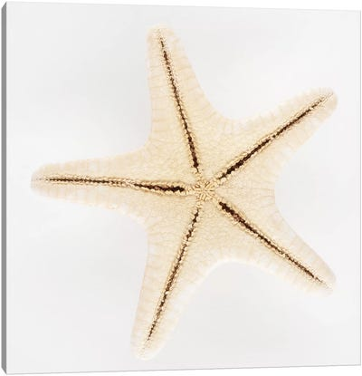 Seashell Star Canvas Art Print