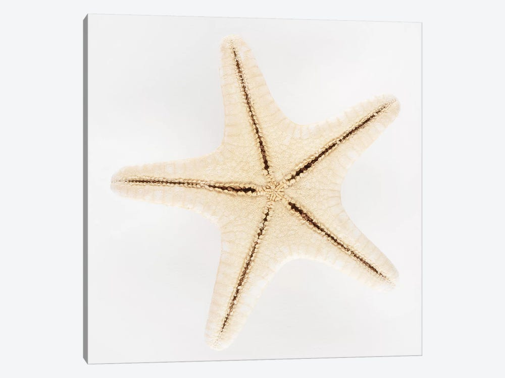 Seashell Star by Philippe Hugonnard 1-piece Canvas Print